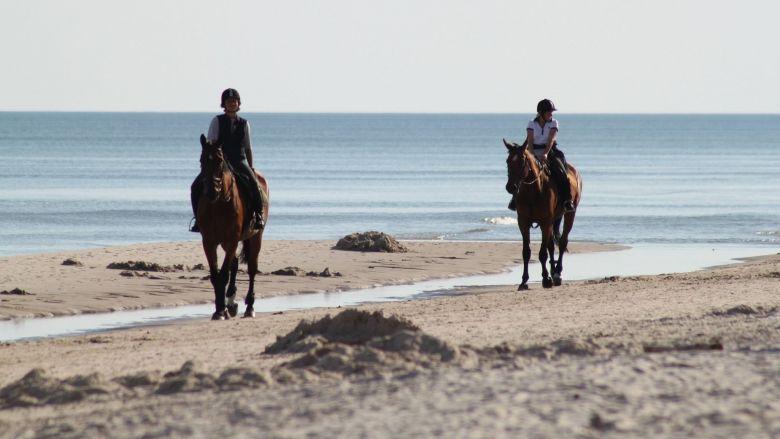 Les randonnées à cheval et le tourisme équestres ont été durement touchés / © Sebagee/pixmania