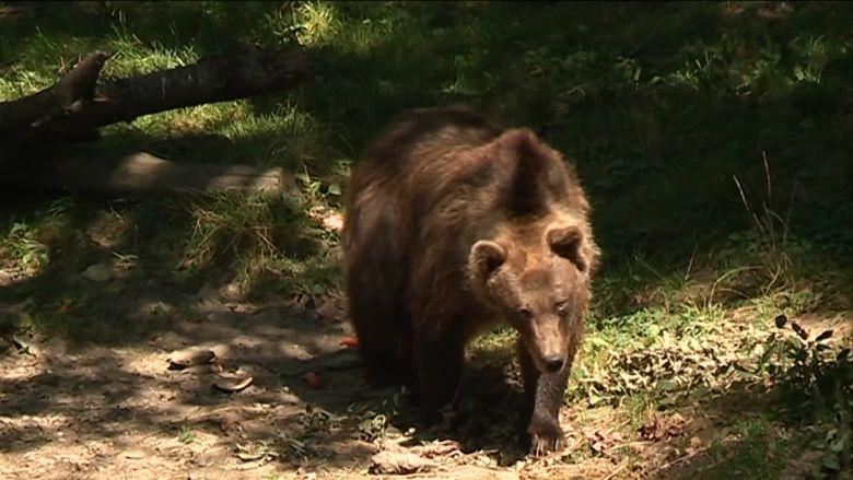On devrait retrouver les ours du parc en juin. / © FTV