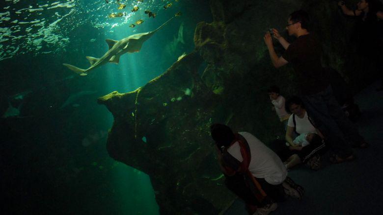 L'Aquarium de La Rochelle va devoir fortement réduire le flux de ses visiteurs tant que les mesures sanitaires seront en vigueur. / © Patrick Lavaud MaxPPP