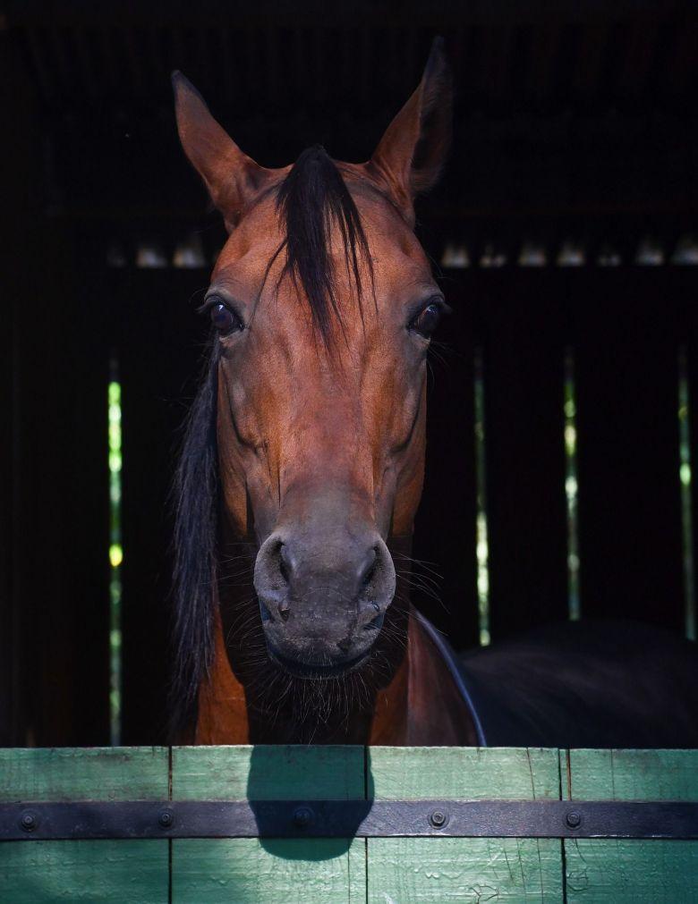 Pendant deux mois, il a fallu nourrir les chevaux qui ne pouvaient aller au pré / © Christels/pixabay