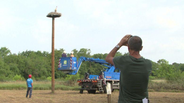 Pour déplacer les cigognes, une plateforme de métal a été installée par les équipes d'Enedis. / © France 3 Aquitaine