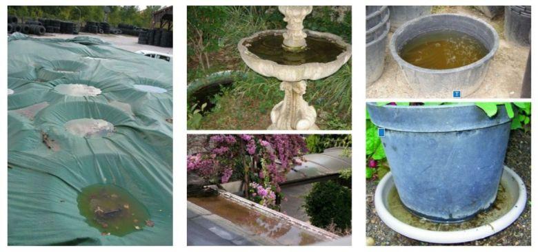 Eliminer toute reserve d'eau même minuscule qui pourrait permettre au moustique de pondre / © Signalement-moustique.anses